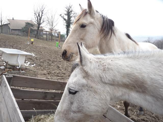 2 chevaux que j'ai en accueil Chevau80
