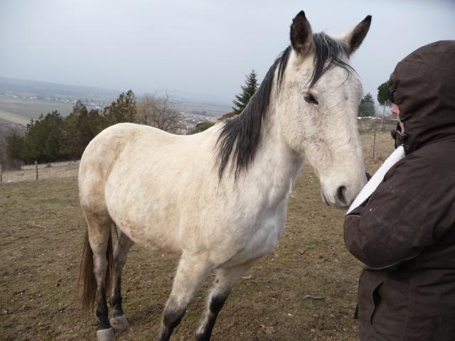 2 chevaux que j'ai en accueil Chevau81