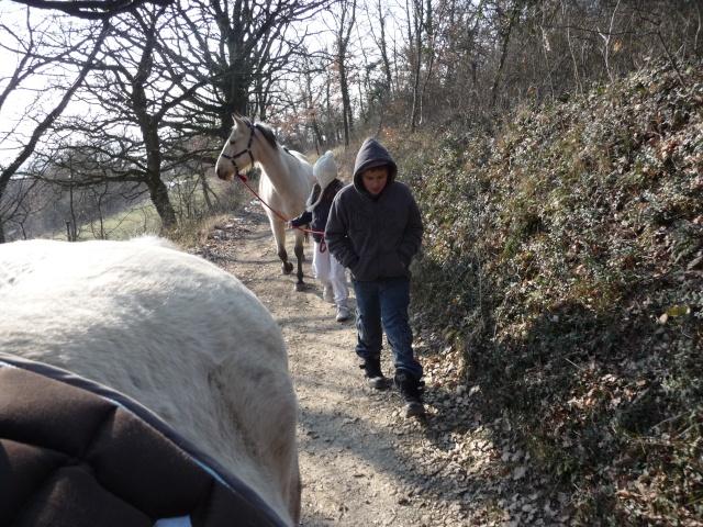 2 chevaux que j'ai en accueil Chevau83