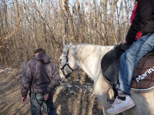 2 chevaux que j'ai en accueil Chevau84