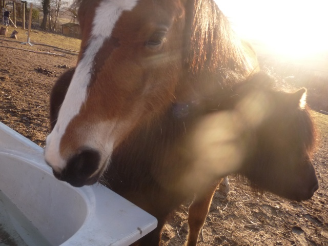 à fond Pony Games  - Page 5 Mars_228