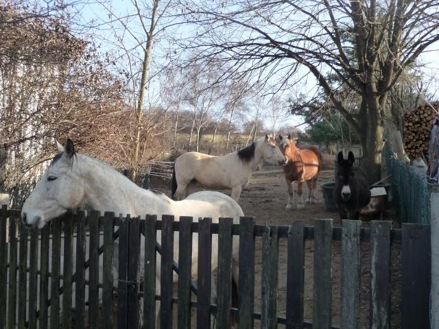 2 chevaux que j'ai en accueil Mars_258