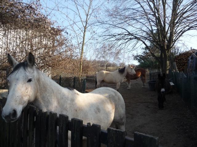 2 chevaux que j'ai en accueil Mars_259