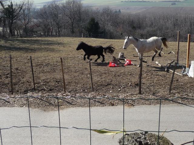 "Concours : ""cheval au galop"" GAGNANTE : TItâne Mars_268"