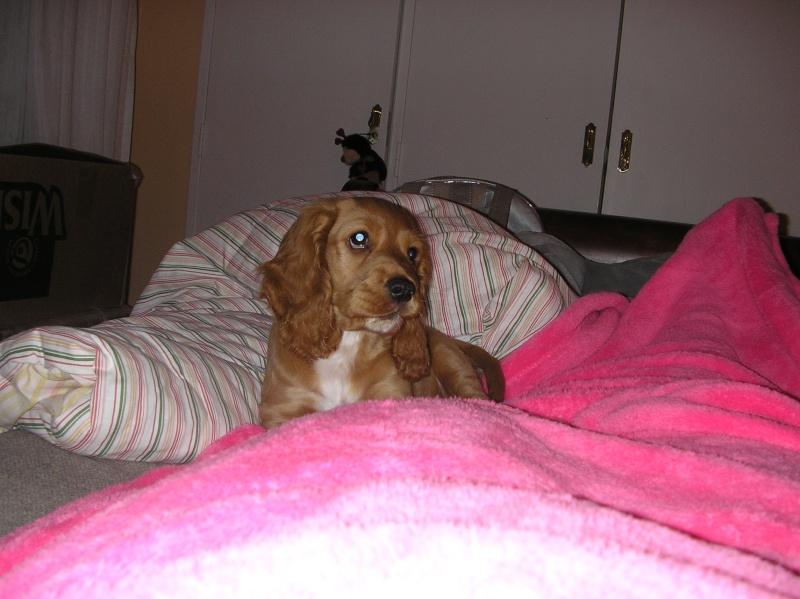 Mi perro preferido P7200011