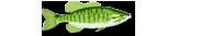 Pêche, espace halieutique