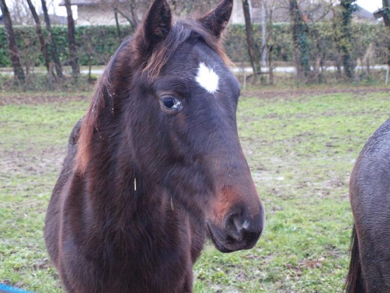 poulain quater horse Pc053712