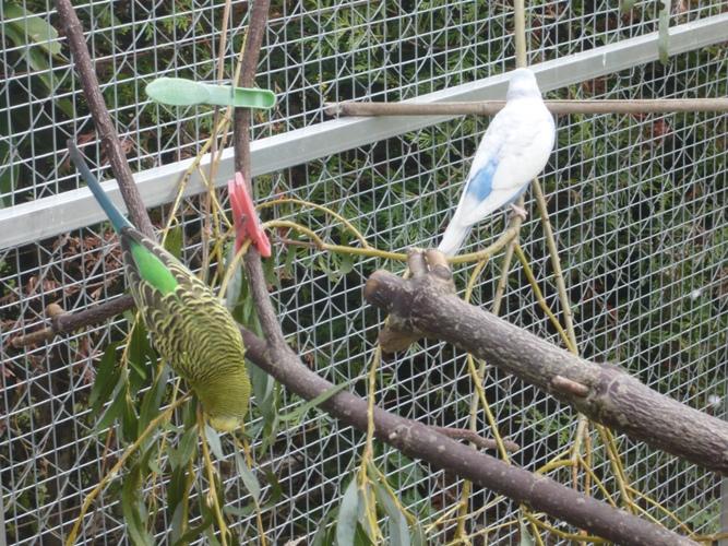 happy birds :) P1090310