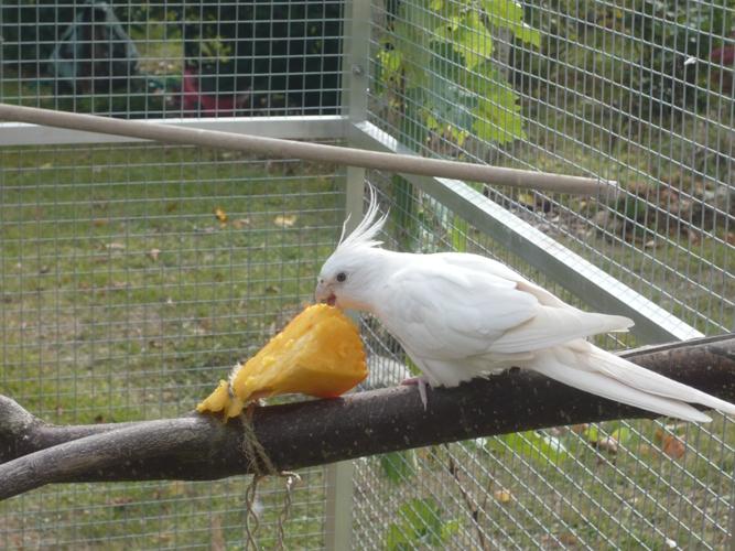 happy birds :) P1090312
