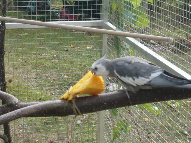 happy birds :) P1090313