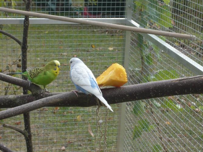 happy birds :) P1090314