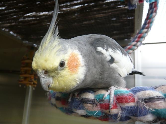 happy birds :) P1090315