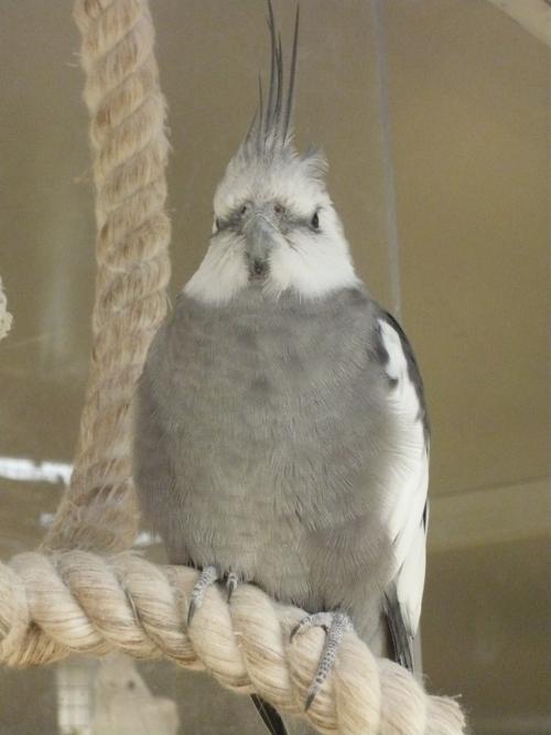 happy birds :) P1090410