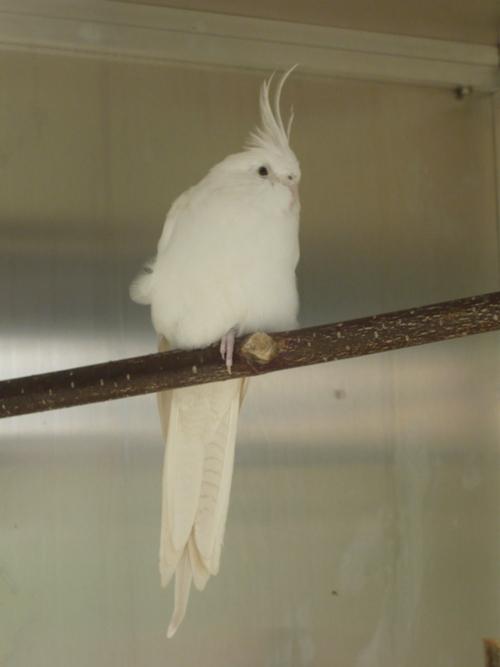 happy birds :) P1090411