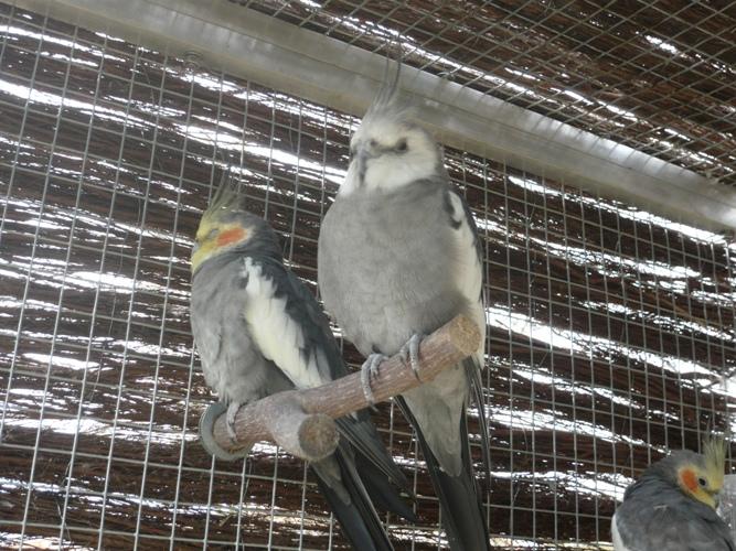 happy birds :) P1090412