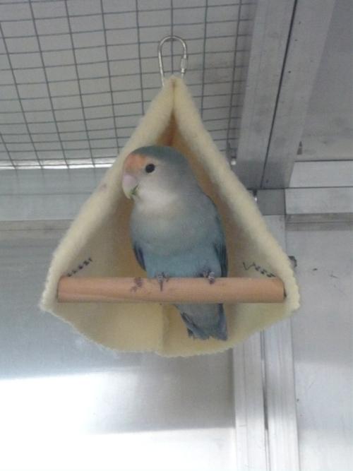 happy birds :) P1090413