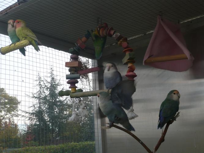 happy birds :) P1090414