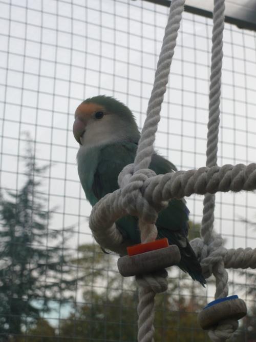 happy birds :) P1090415