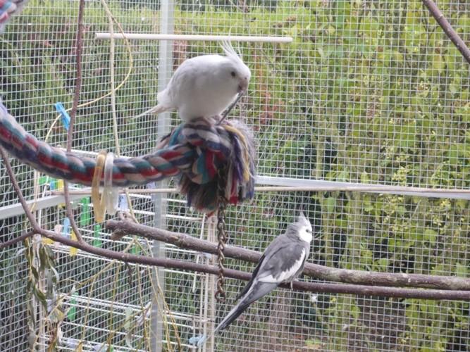 happy birds :) P1090416