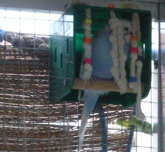 happy birds :) P1090511