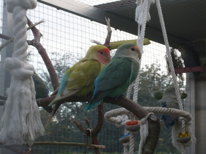 happy birds :) P1090512