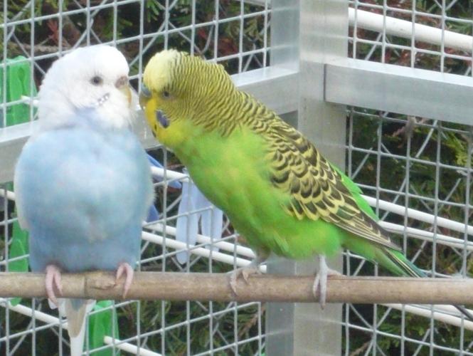 happy birds :) P1090513