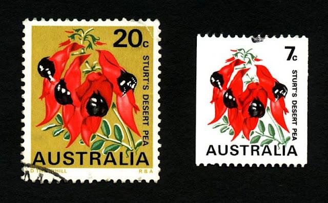 [Australie] - Swainsona formosa (Sturt Desert Pea) : la fleur du désert 3s-stu10