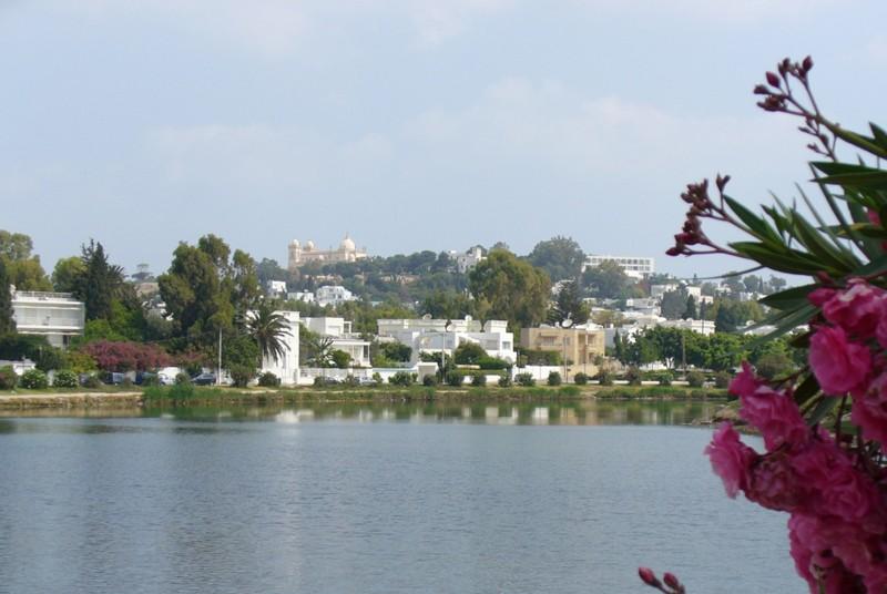 Colline de Byrsa - Carthage - Tunisie 50419010