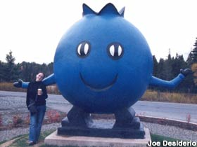 Blueberry Man - Oxford - Canada Xnsoxf10