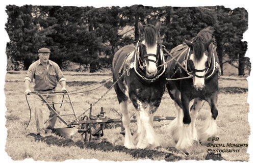 Heavy horse - plough 5069bw11