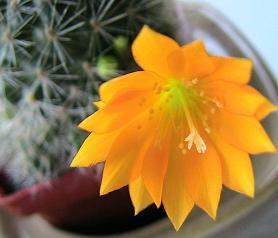 Кто на какой цветок похож Kaktus10