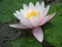 Кто на какой цветок похож Wodjan10