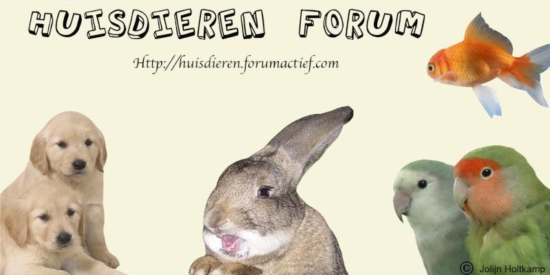 Stem nu op dit forum! Banner11