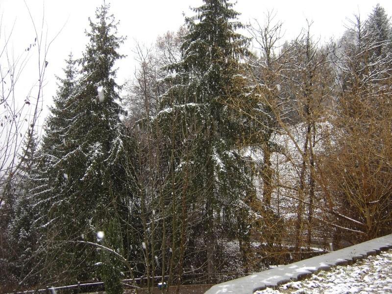 La neige .... presque! Dsc02220