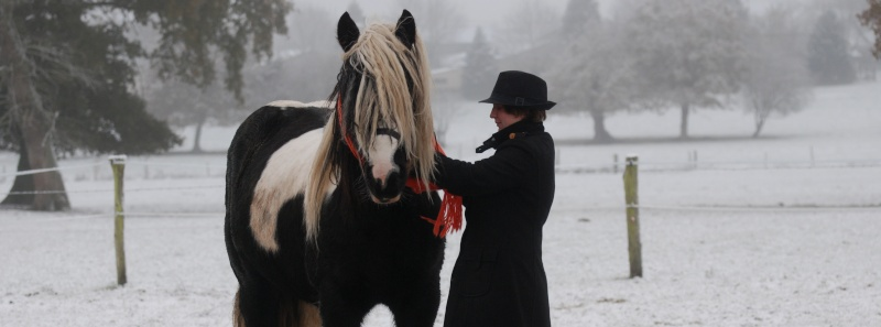 Concours Photos Décembre : Le Cheval et la Neige Image010