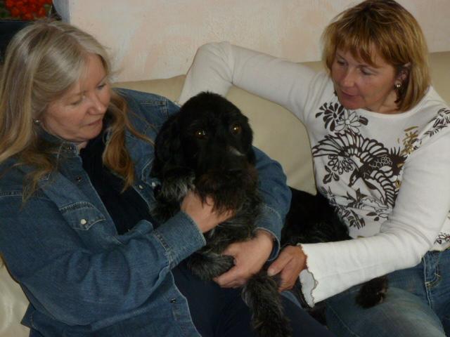 [URGENT AVANT EUTHA] Le refuge affiche complet - 4 chiens vous attendent ! (Picardie) - Page 2 Sousso11