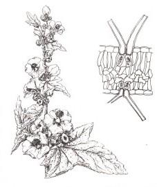 Травы 058-210