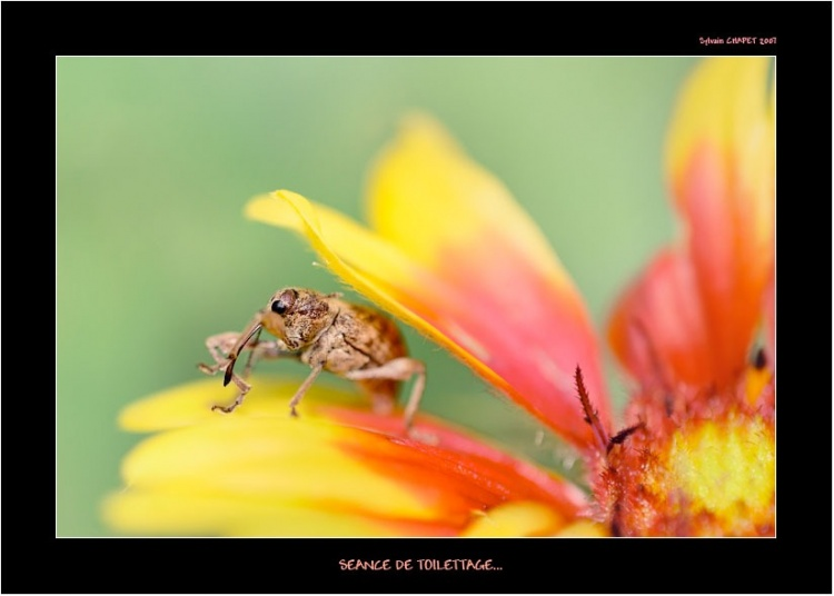 Ces adorables insectes 22526011