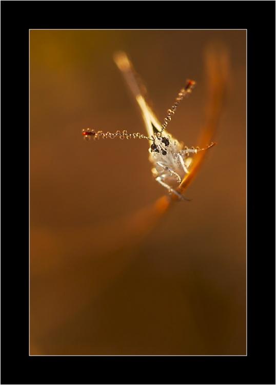Ces adorables insectes Czum2p11