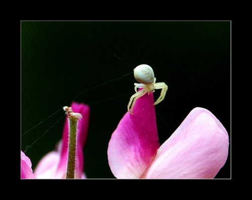 Ces adorables insectes Jxuf3h10