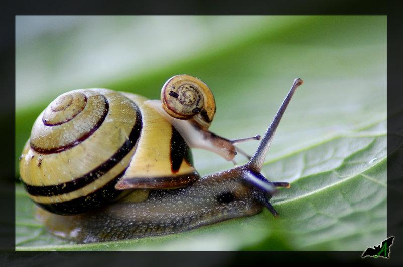 Ces adorables insectes Snails10