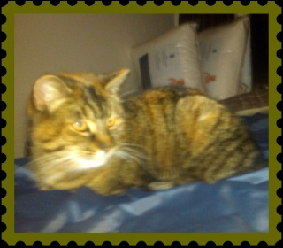 chatte a donner Img00111
