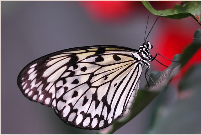 Papillon du jour Dsc_0210