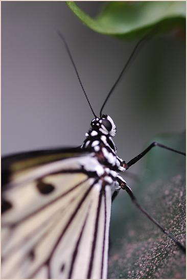 Papillon du jour Dsc_0211