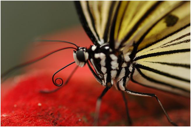 Papillon du jour Dsc_0212