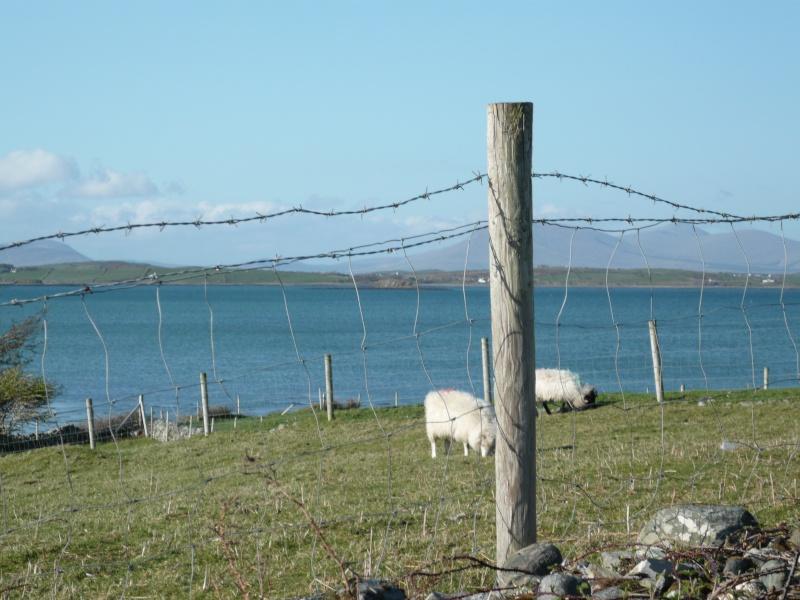 voyage en irlande ! P1000237