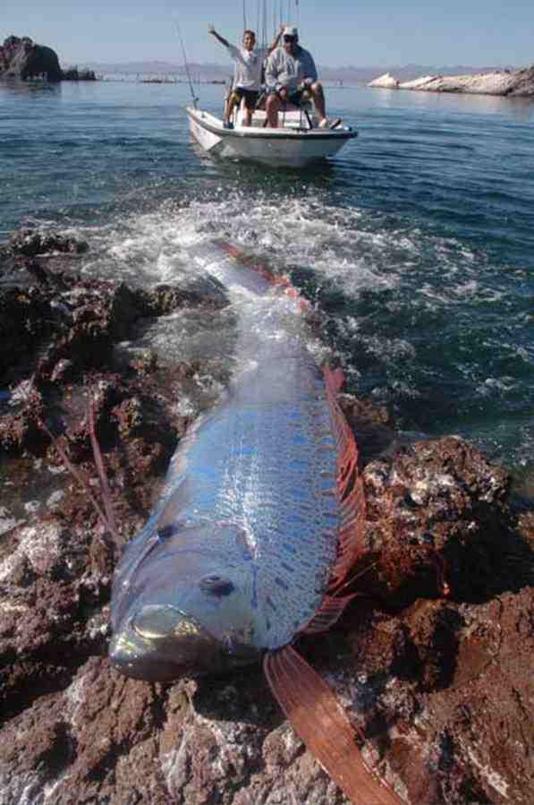 سمكة غريبة في ماليزيا لأول مرة تنشر صورها ..!! D170de10