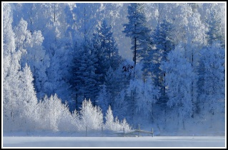 White Wind Forest