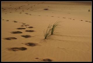 Zoni Desert