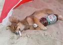 Фото домашних животных 11890010
